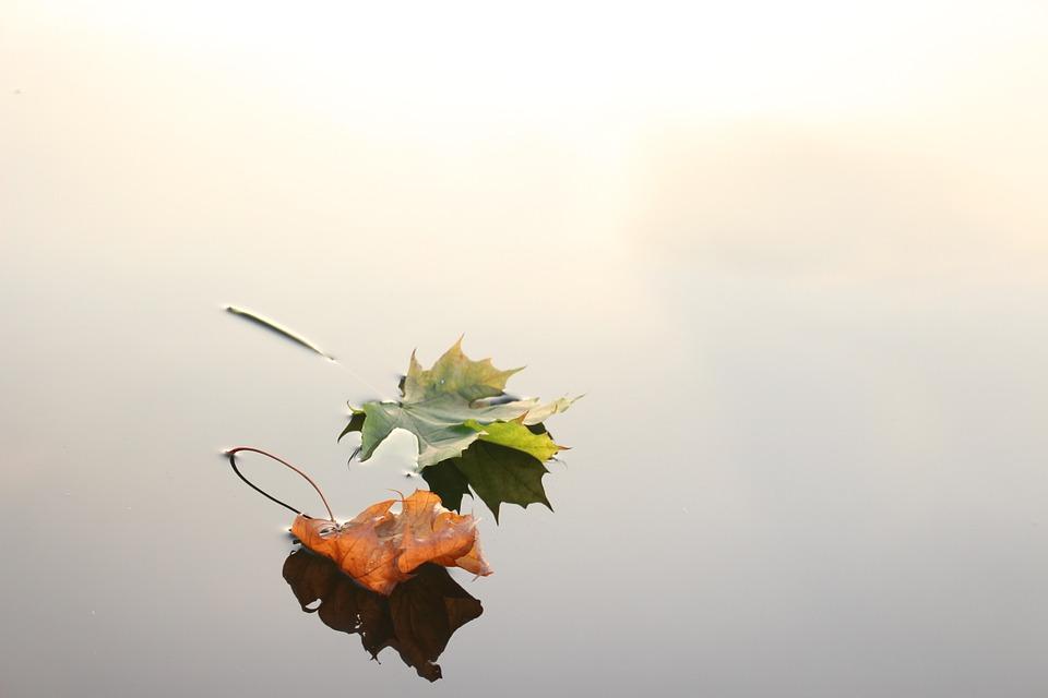 maple-leaves-690233_960_720